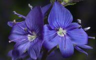 List Of Blue Colored Flowers 25 Desktop Background