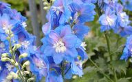 List Of Blue Colored Flowers 3 Wide Wallpaper