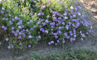 List Of Blue Colored Flowers 31 Widescreen Wallpaper