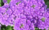List Of Blue Colored Flowers 35 Widescreen Wallpaper