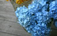 List Of Blue Colored Flowers 5 Widescreen Wallpaper