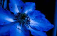 List Of Blue Colored Flowers 6 Cool Hd Wallpaper