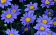 List Of Blue Colored Flowers 9 Free Wallpaper