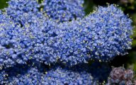 List Of Blue Flowers 10 Free Wallpaper
