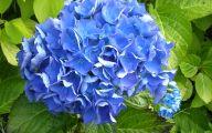 List Of Blue Flowers 14 Free Hd Wallpaper