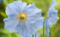 List Of Blue Flowers 19 Cool Wallpaper