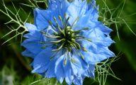 List Of Blue Flowers 21 Cool Hd Wallpaper