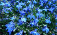 List Of Blue Flowers 3 Hd Wallpaper