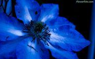 List Of Blue Flowers 30 Desktop Background