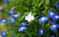 List Of Blue Flowers 38 Desktop Wallpaper