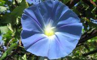 List Of Blue Flowers 9 Widescreen Wallpaper