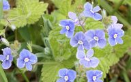 List Of Blue Flowers Names 13 Cool Hd Wallpaper