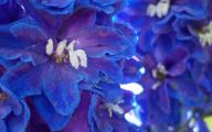 List Of Blue Flowers Names 16 Background