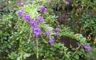 List Of Blue Flowers Names 17 Cool Hd Wallpaper