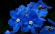 List Of Blue Flowers Names 19 Background