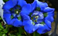 List Of Blue Flowers Names 9 Background