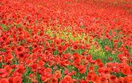 List Of Red Flowers 1 Desktop Wallpaper