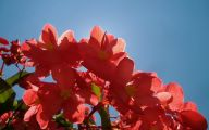 List Of Red Flowers 13 High Resolution Wallpaper