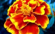 List Of Red Flowers 14 Desktop Wallpaper