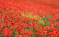 List Of Red Flowers 18 Desktop Background