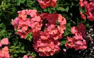 List Of Red Flowers 21 Free Hd Wallpaper
