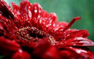 List Of Red Flowers 22 Free Wallpaper