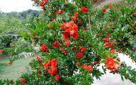 List Of Red Flowers 26 Widescreen Wallpaper