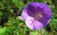 Names Of Purple Flowers With Pictures 13 Widescreen Wallpaper