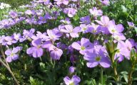 Names Of Purple Flowers With Pictures 19 High Resolution Wallpaper