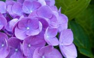 Names Of Purple Flowers With Pictures 29 Widescreen Wallpaper