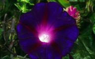 Names Of Purple Flowers With Pictures 32 Cool Wallpaper