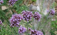 Names Of Purple Flowers With Pictures 34 Cool Hd Wallpaper