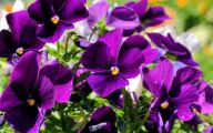 Names Of Purple Flowers With Pictures 5 Desktop Background