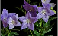 Names Of Purple Flowers With Pictures 6 Cool Wallpaper