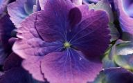Names Of Purple Flowers With Pictures 8 Widescreen Wallpaper