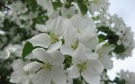 Names Of White Flowers 16 High Resolution Wallpaper