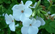 Names Of White Flowers 26 Free Hd Wallpaper