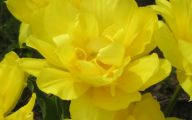 Names Of Yellow Flowers 12 Free Hd Wallpaper
