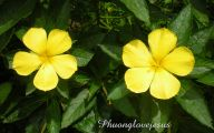 Names Of Yellow Flowers 15 Free Wallpaper
