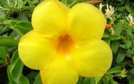 Names Of Yellow Flowers 16 High Resolution Wallpaper