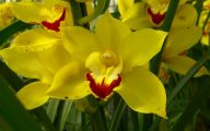 Names Of Yellow Flowers 2 Free Hd Wallpaper