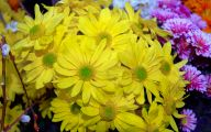 Names Of Yellow Flowers 21 Widescreen Wallpaper