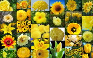 Names Of Yellow Flowers 27 Free Wallpaper