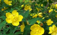 Names Of Yellow Flowers 4 Free Hd Wallpaper