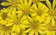 10 Names of Yellow Flowers Widescreen Wallpapers