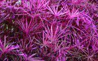 Photos Of Purple Flowers 1 Desktop Background