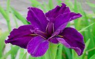 Photos Of Purple Flowers 11 Widescreen Wallpaper