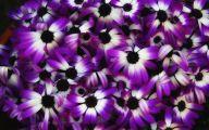 Photos Of Purple Flowers 18 Hd Wallpaper