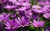 Photos Of Purple Flowers 2 Cool Hd Wallpaper
