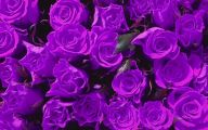 Photos Of Purple Flowers 20 Background Wallpaper
